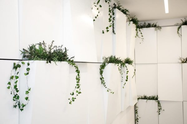 greenin pflanzen