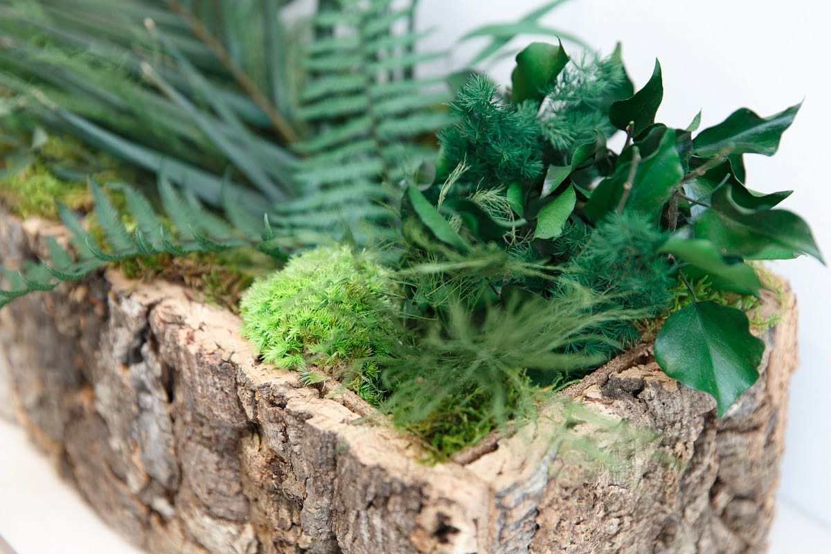 pflanzen kork