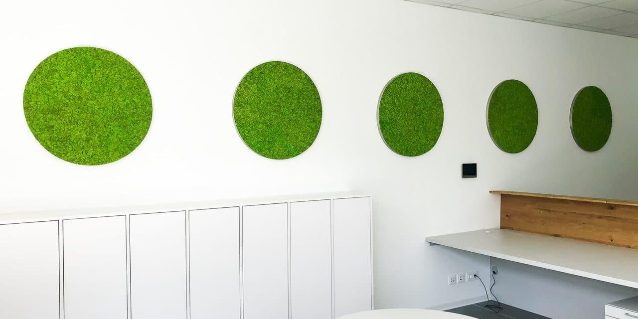moosbilder-greenin-islandmoos-oesterreich-1280x640