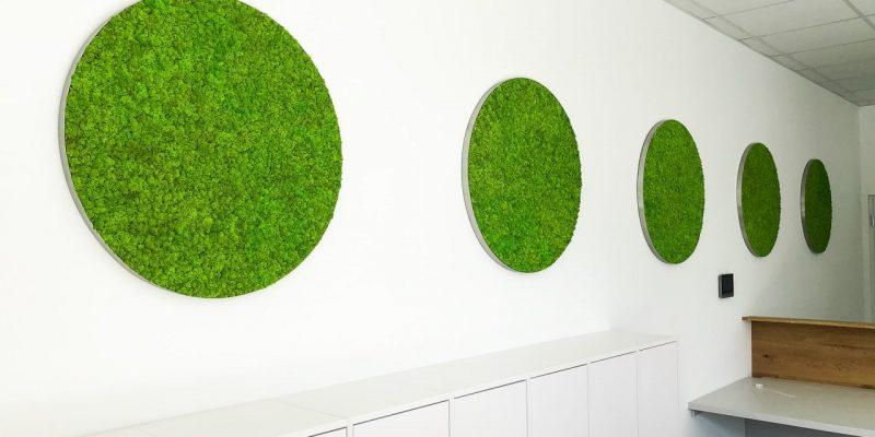 Moosbilder in kreisförmiger Form in einem Büro in Wien, Österreich.